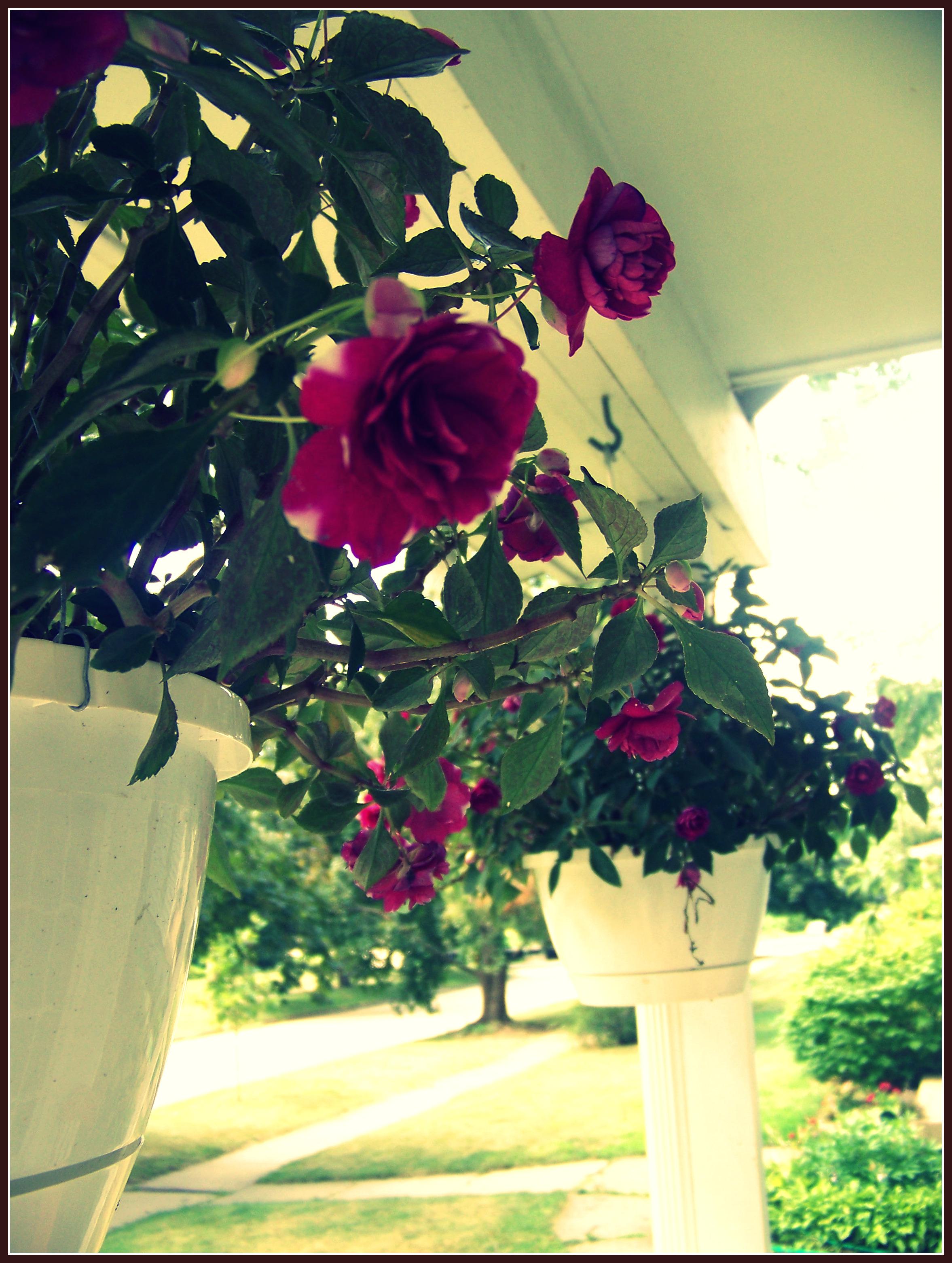 Porch 1 blog