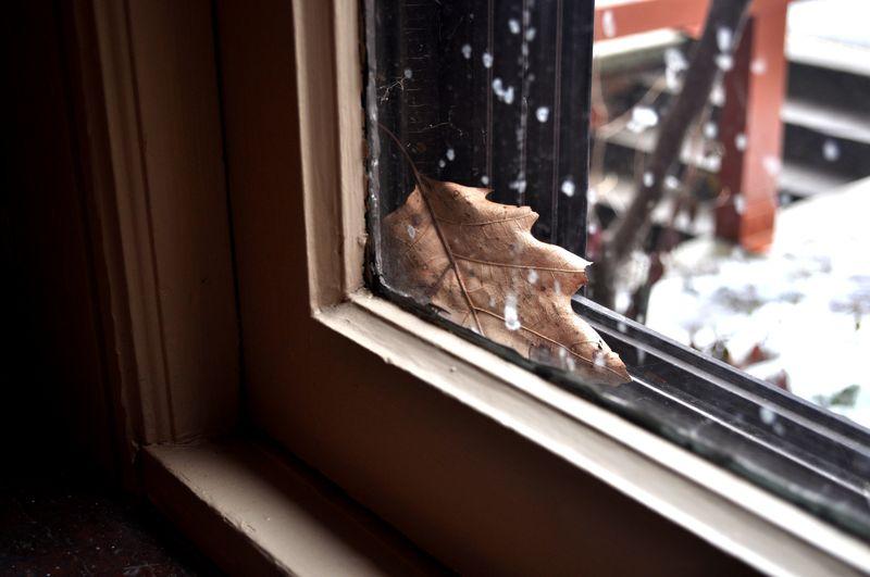 Leaf in window